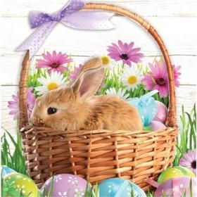 Toute l'équipe de YODECO vous souhaite de joyeuses fêtes de Pâques 🐇 #paques #lapin #yodeco #printemps